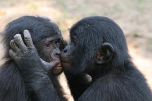 La sociedad bonoba