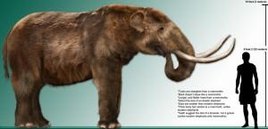 Elefantes, Camellos y Leones Nativos de las Américas